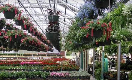 ashwood gardens & nursery